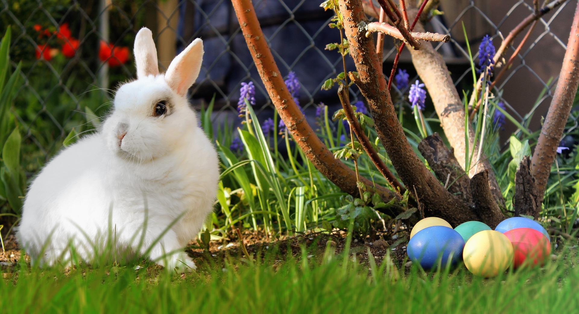 Pasti, iepuri si oua