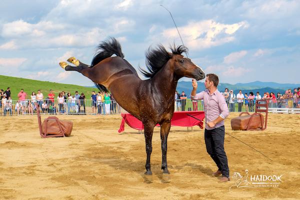 Haidook Summer Fest